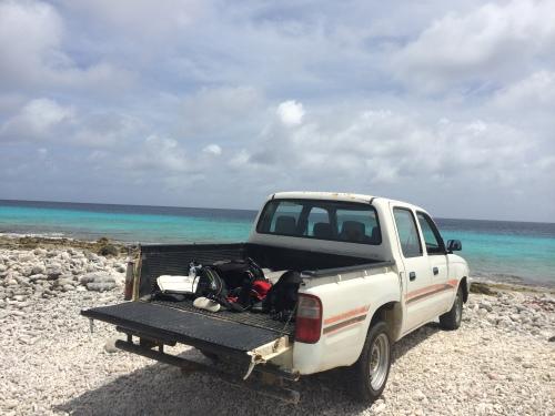 Bonaire shore dive